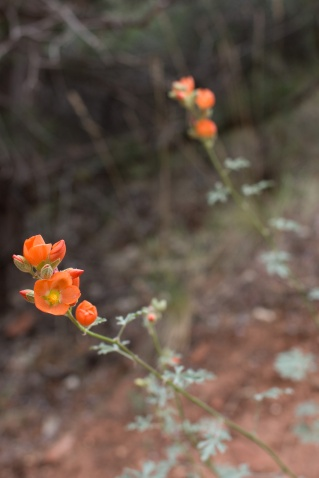 zion-flowers